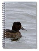 Tufted Duck Spiral Notebook