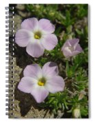 Tufted Phlox Spiral Notebook