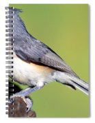 Tufted Titmouse Parus Bicolor Spiral Notebook
