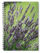 Tuilieres Lavender Spiral Notebook