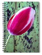Tulip Against Green Wall Spiral Notebook