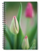 Tulip Curves And Blooms Spiral Notebook