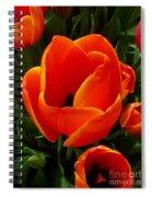 Tulip Orange Flower Spiral Notebook
