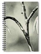Tulip Poplar Empty Seed Heads - Black And White Spiral Notebook