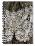 Tulip-tree Beauty Moth Spiral Notebook