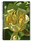 Tulip Tree Spiral Notebook