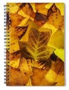 Tulip Tree Leaves In Autumn Spiral Notebook