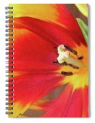 Tulip Warm Tones Spiral Notebook