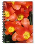 Tulips - Field With Love 25 Spiral Notebook