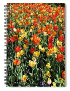 Tulips - Field With Love 50 Spiral Notebook