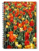 Tulips - Field With Love 51 Spiral Notebook