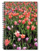 Tulips - Field With Love 56 Spiral Notebook