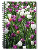 Tulips - Field With Love 60 Spiral Notebook