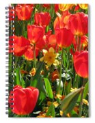 Tulips - Field With Love 71 Spiral Notebook