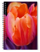 Tulips In Orange And Purple Spiral Notebook