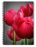 Tulips In The  Morning Light Spiral Notebook