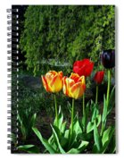 Tulips In The Spring Spiral Notebook