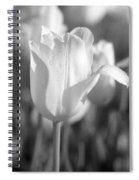 Tulips - Infrared 09 Spiral Notebook