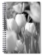 Tulips - Infrared 11 Spiral Notebook
