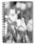 Tulips - Infrared 12 Spiral Notebook