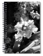Tulips - Infrared 24 Spiral Notebook