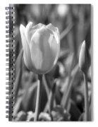 Tulips - Infrared 27 Spiral Notebook