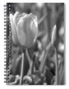 Tulips - Infrared 28 Spiral Notebook
