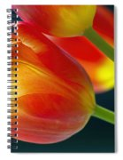 Tulips On Black 2a Spiral Notebook