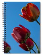 Tulips On Blue Spiral Notebook