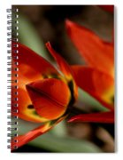Tulips On Fire Spiral Notebook