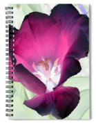 Tulips - Perfect Love - Photopower 2042 Spiral Notebook