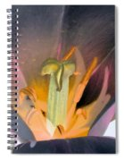 Tulips - Perfect Love - Photopower 2065 Spiral Notebook