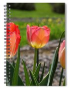 Tulips Red Pink Tulip Flowers Art Prints Spiral Notebook