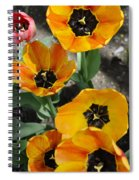 Tulips Tp Spiral Notebook