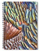 Turkey Feather Colors Spiral Notebook