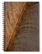 Turkey Feather Spiral Notebook
