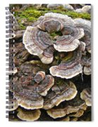 Turkey Tail Bracket Fungi -  Trametes Versicolor Spiral Notebook