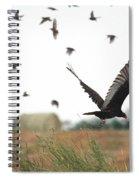 Turkey Vulture Takes Flight Spiral Notebook