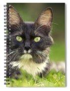 Turkish Angora Cat Spiral Notebook