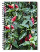 Turks Cap And Rain Drops Spiral Notebook