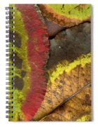 Turning Leaves 2 Spiral Notebook