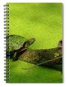 Turtle-190 Spiral Notebook