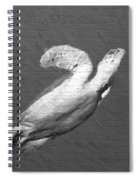 Turtle Gaffiti Spiral Notebook