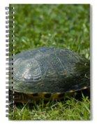 Turtle Grass Spiral Notebook