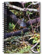 Turtle In The Glades Spiral Notebook