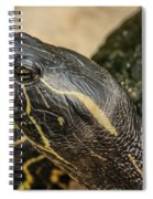 Turtle Spiral Notebook