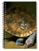 Turtles Float Spiral Notebook