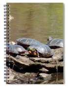 Turtles Spiral Notebook