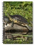 Turtles Sunning Spiral Notebook