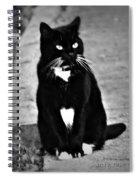 Tuxedo Cat Spiral Notebook